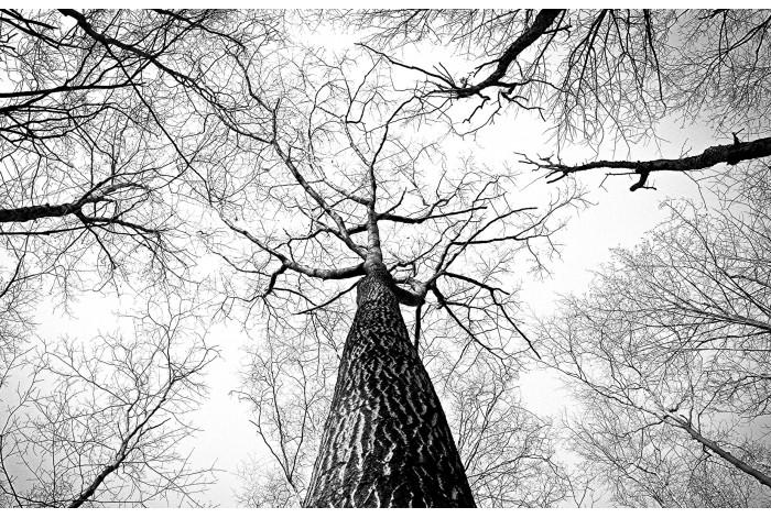 Модульная картина  Дерево картина из 5 частей